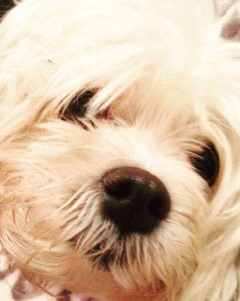 Pepa Pets Dog One Animal Animal Themes Domestic Animals Close-up