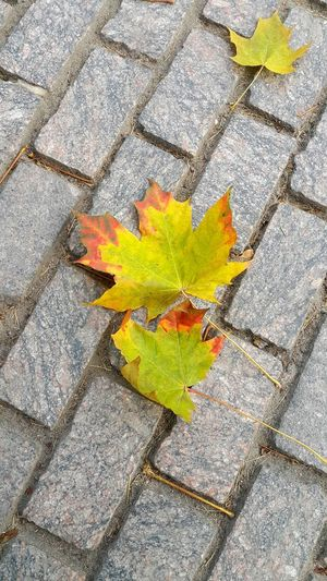 Leaf High Angle View Autumn Day Change No People Outdoors Maple Leaf Close-up Nature Autumn Leaves Yellow Leaves Saint-Petersburg Walking On The Street Sudden Thoughts