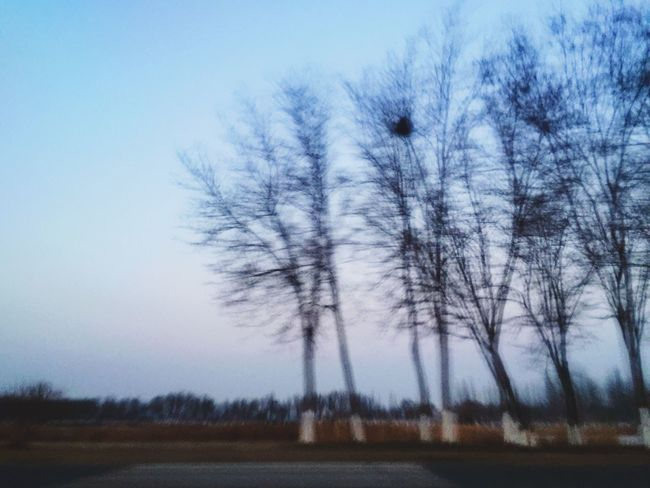 Morning Morning Sky Clear Sky Tree Bare Tree Outdoors Nature Beauty In Nature Fast Speed Speeding On The Road