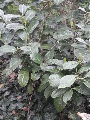 Leaf Backgrounds Full Frame Close-up Plant Green Color