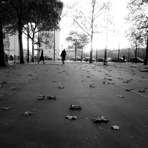 Silhouette People Full Length Day Real People Adults Only Outdoors Black And White Friday Arts Culture And Entertainment EyeEm Best Shots City City Of Paris Capture The Moment Scenics Paris, France  Horizon Blackandwhite Photography Black And White Street Photography Street Leaves 🍁 Dead Leaves On The Ground