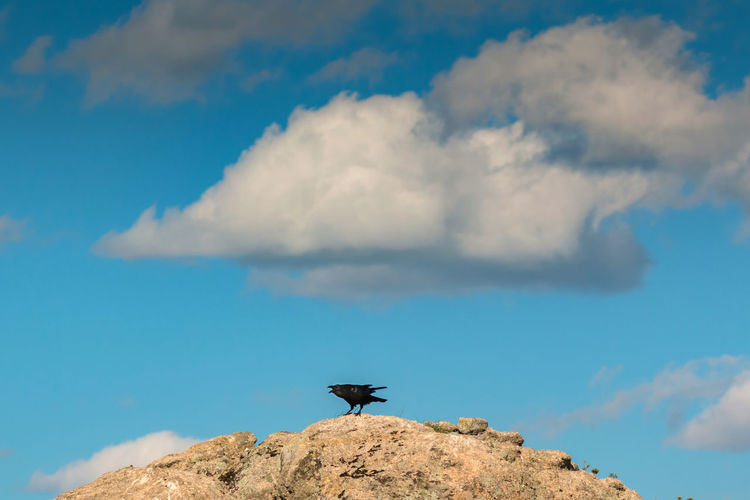 Low angle view of bird on rock against sky