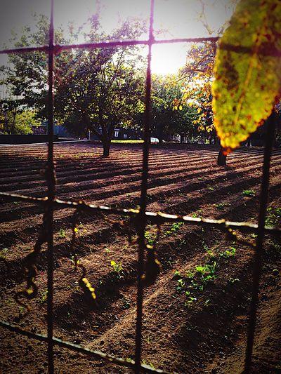 Tree Sun Mediterraneandiet Beautiful Day Colture Iphone5photo Scorci Pompeii  Ruins Villadeimisteri