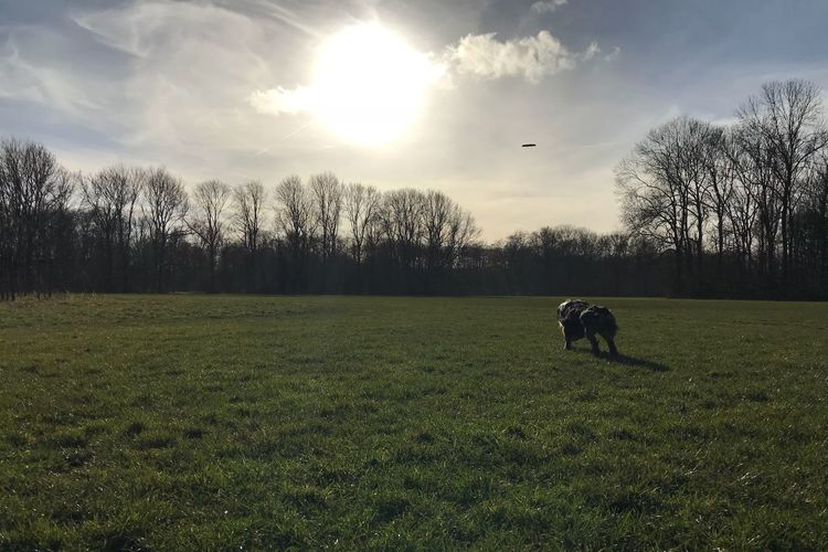 Beautiful Sky No Filter, No Edit, Just Photography No Filter Grass Running Dog Frisbee Australianshepherd Animal Themes Grass Dog Domestic Animals Tree One Animal Pets Sky Field Nature Mammal Cloud - Sky Landscape No People Outdoors Beauty In Nature Sunlight Bare Tree