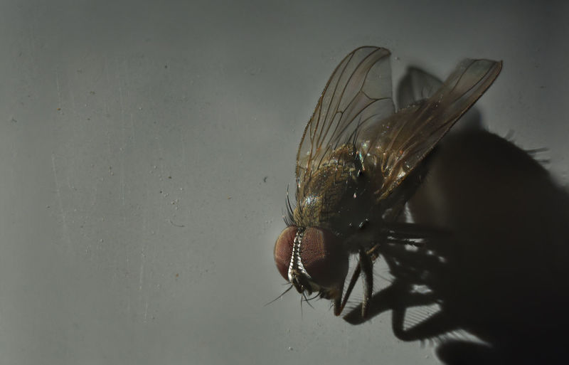 Close-up of fly on glass