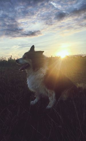 Creative Light And Shadow Summer Dogs IPhone Evening Light Family Walks Check This Out Countryside Dog Cross Breed