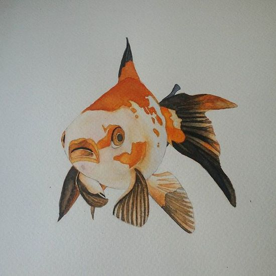 Goldfish Watercolor Watercolorpainting Paint Painting Watercolour WaterColorCollection GoldFish! Mypainting