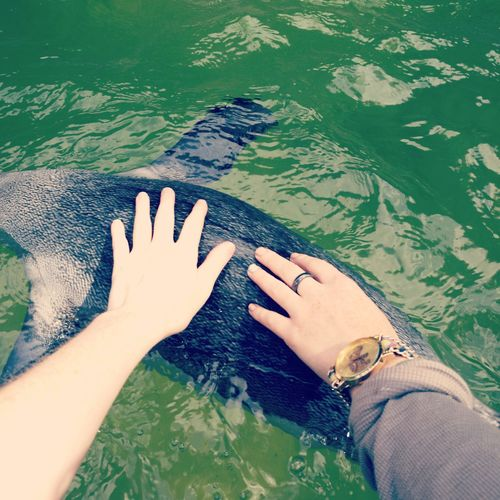Cropped Image Of Friends Touching Penguin In Lake