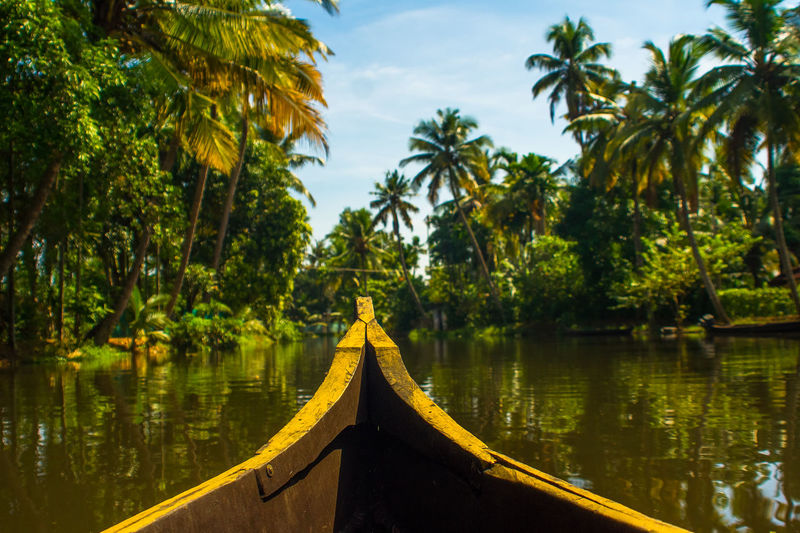Jungle river scene from tour boat in Kerala Backwaters, Southern India Allapuzha Boating Exotic Expedition India Paddle Boat Steamy Tour Boat Trekking Tropics Adventure Travel Alleppey Backwaters Coconut Trees Jungle Jungle Trekking Kerala Paddling Palm Trees River River Boat River Cruise Tour Travel Backgrounds Tropical Tree