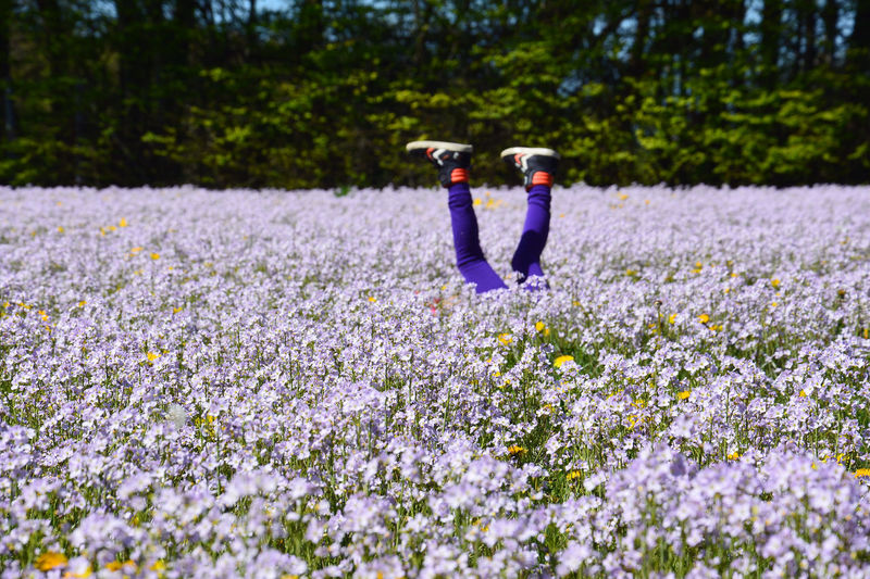 Upside down Child Childhood Childsplay Denmark Field Flower Field Flowers Fun Legs Leisure Leisure Activity Life Lifestyles Meadow Meadow Flowers Nature Outdoors Playing Purple Flower Real People Spring Spring Flowers Springtime Upside Down Vejle The Secret Spaces