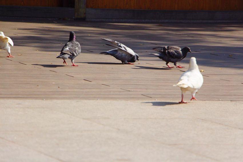 Bird Animal Themes Animals In The Wild Animal Wildlife Day Outdoors No People