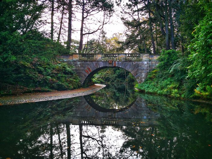 Arch bridge over lake in forest