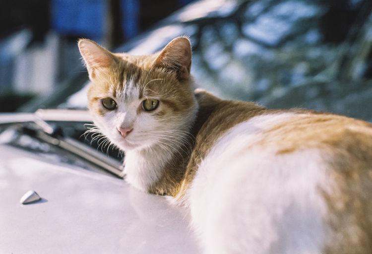 Cat Pentax Pentax MZ-S 135film 135mm