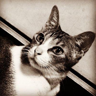 Lovepet Cats HongKong Cat♡ Catsofinstagram Cat Pets PE Petlover Petstagram Petal Pets Corner Petpet Cat Lovers