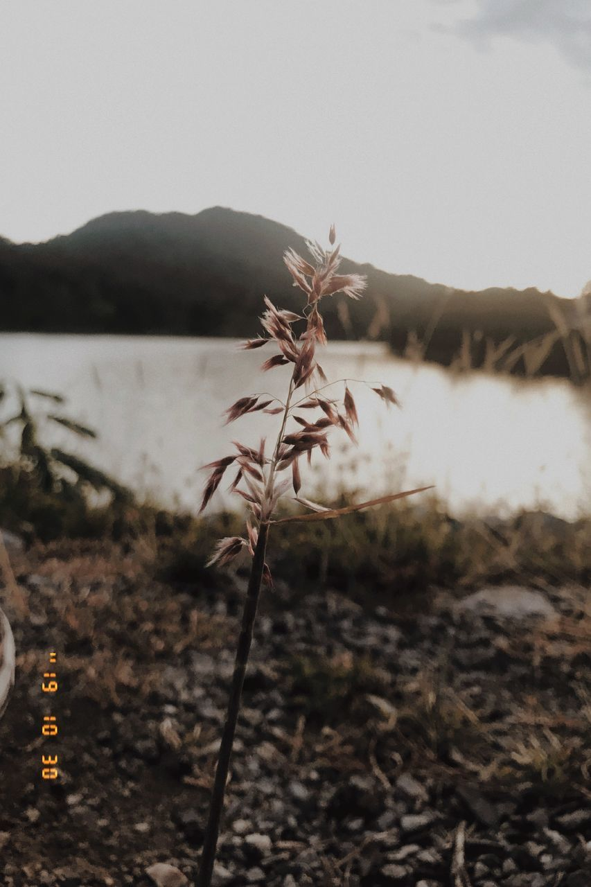 mountain, plant, nature, sky, focus on foreground, beauty in nature, no people, growth, close-up, water, land, tranquility, flower, flowering plant, day, field, fragility, scenics - nature, vulnerability, outdoors