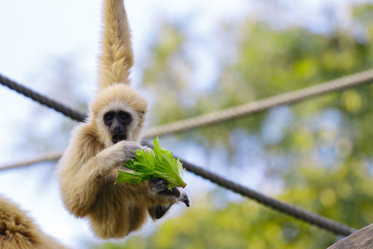 Animal Themes Animal Wildlife Animals In The Wild Day Focus On Foreground Low Angle View Mammal Monkey Nature No People Outdoors Primate Tree Young Animal