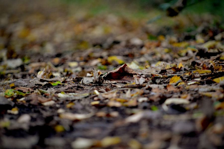 Autumn Autumn Leaves Leaves Autumn Walk Brown Foliage