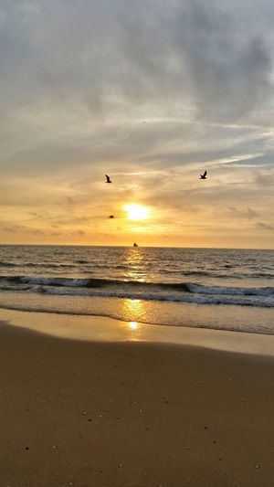 Bird Sunset Beach Sea Animals In The Wild Animal Wildlife Animal Themes Flying Nature Sky Sand Dramatic Sky Travel Destinations Silhouette Beauty In Nature Outdoors Horizon Over Water Goodvibes🌾🌼✌️ Summer Vibes Holidays ☀ Nethetlands Den Haag Beach Scenics Flock Of Birds Tranquility