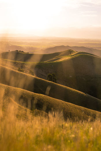 Sun setting over the Wither Hills Farm Park Grass Hills Sunlight Travel Beauty In Nature Day Dusk Field Grassland Landscape Meadow Mountains Nature New Zealand No People Outdoors Rural Scene Scenics Sky Summer Sunset Tranquil Scene Tranquility Travel Destinations Warm Colors