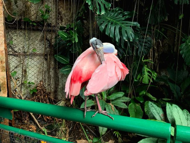 Pink Color No People Flamingo Outdoors Nature Day Plant Perching Close-up Bird Animal Themes