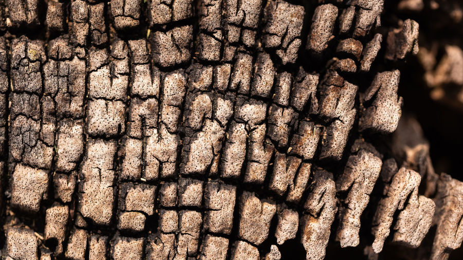 wood background Backgrounds Full Frame Nature Textured  Natural Pattern Brown Close-up No People Outdoors Wood - Material Old Tree Textured Effect Day Pattern Damaged Eyeem Background