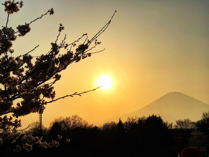 """""""Own only what you can carry with you...let your memory be your travel bag."""" Sunset Tree Silhouette Nature Beauty In Nature Scenics Tranquil Scene Outdoors Sky Mountain No People Sun Tranquility Branch Growth Day Springtime Fujisan Tourist Attraction  Travel Travel Photography Traveling Japan EyeEm Nature Lover Eyeem Philippines"""