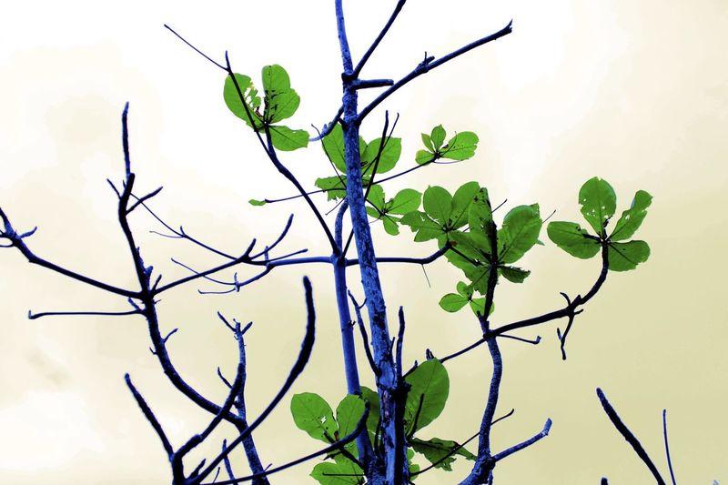 木 Wood 葉っぱ Leaf 日本 Japan Okinawa 沖縄