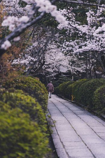 Rear view of person walking on footpath amidst flowering plants