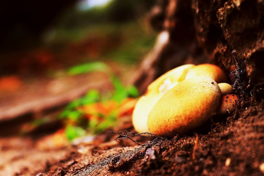 A little nature. Forest Tree Magic Magical Fruit Prickly Pear Cactus Close-up Food And Drink Blooming Growing Mushroom