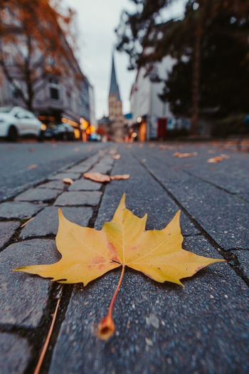 Autumn leave on the street leading to the Münster of Bonn, Germany Leaf Plant Part Autumn Change Nature Falling No People Close-up Tree Yellow Leaves Street Maple Leaf Focus On Foreground Natural Condition Fall Bonn Germany