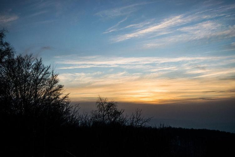 Tree Sunset Silhouette Sky Landscape Atmospheric Mood First Eyeem Photo
