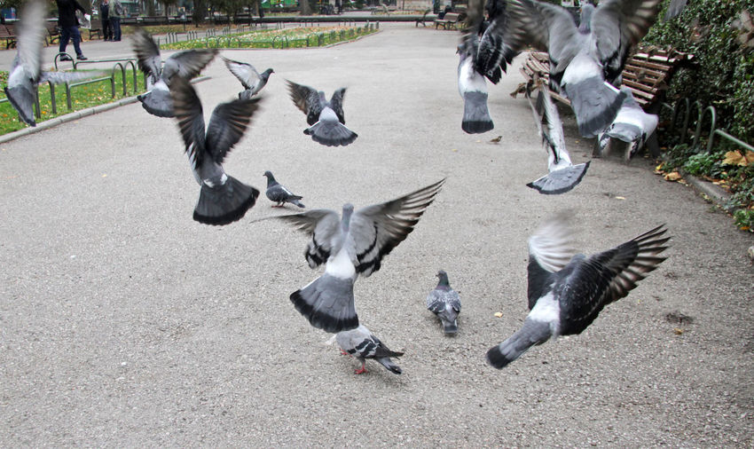 High angle view of pigeons flying over street