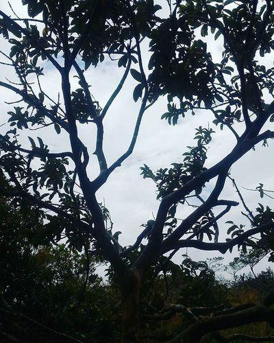Betosalvestrini Sancristobal Venezuela EyeEm Silouette Forest Morning Mountain Asus Zenfone2 Swocs @asususa Quickphoto Trees Green Plants Lomadelviento