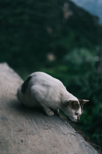 Cat Cute Domestic Domestic Animals Domestic Cat Mammal No People One Animal Pets Vertebrate