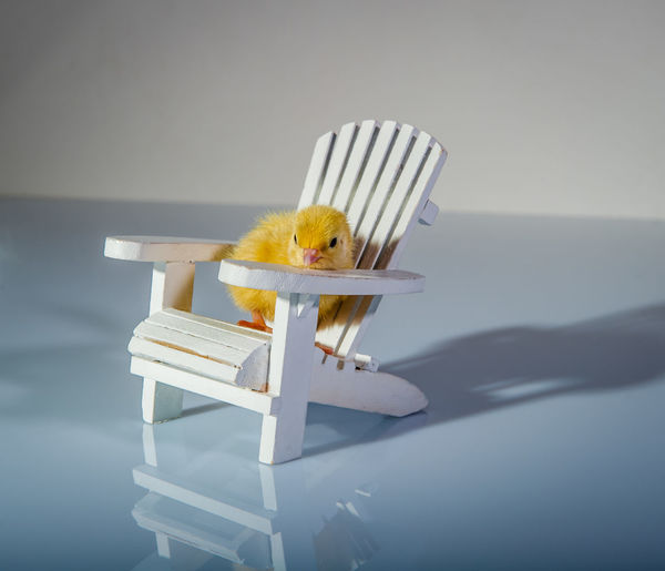 Close-up of yellow bird on table