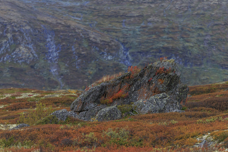 Beautiful colours of autumn in Dovre, Norway. Rock Solid Rock - Object Nature Beauty In Nature No People Mountain Landscape Environment Day Land Non-urban Scene Scenics - Nature Tranquility Geology Plant Tranquil Scene Outdoors Idyllic Physical Geography Formation Norway Dovre Autumn colors