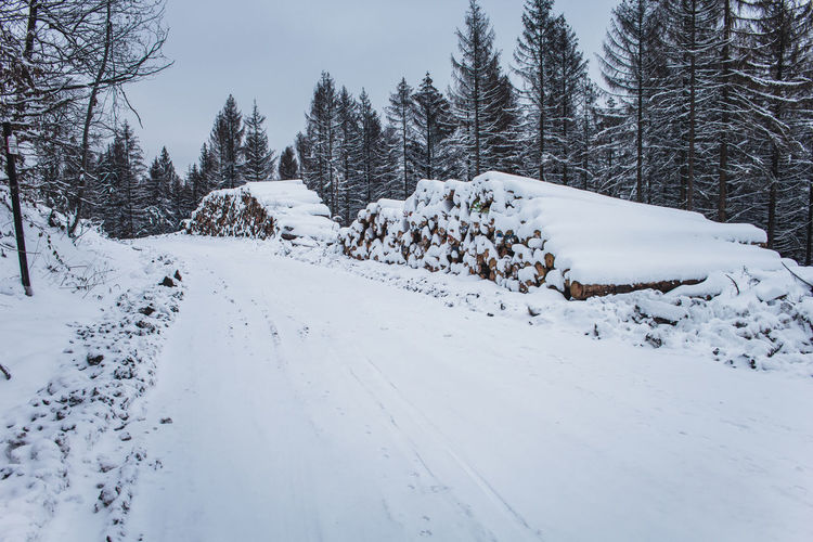 Snow covered trees by road