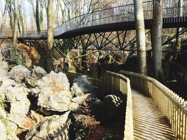 Bridge Bridge - Man Made Structure Architecture Framework Path Pathway Forest Forest Path Bridges Bridging Nature Photography Winter Leaves Stone Stones