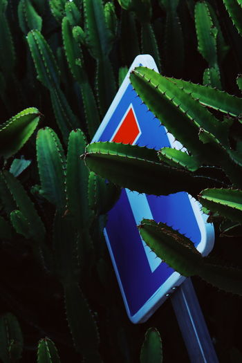 Low angle view of succulent plant