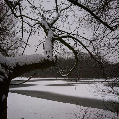 Tangled. Tree