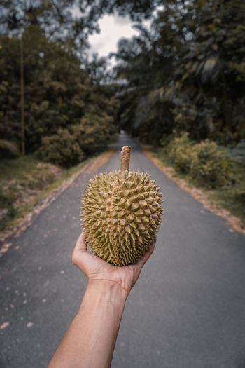 Close-up of hand holding durian outdoors