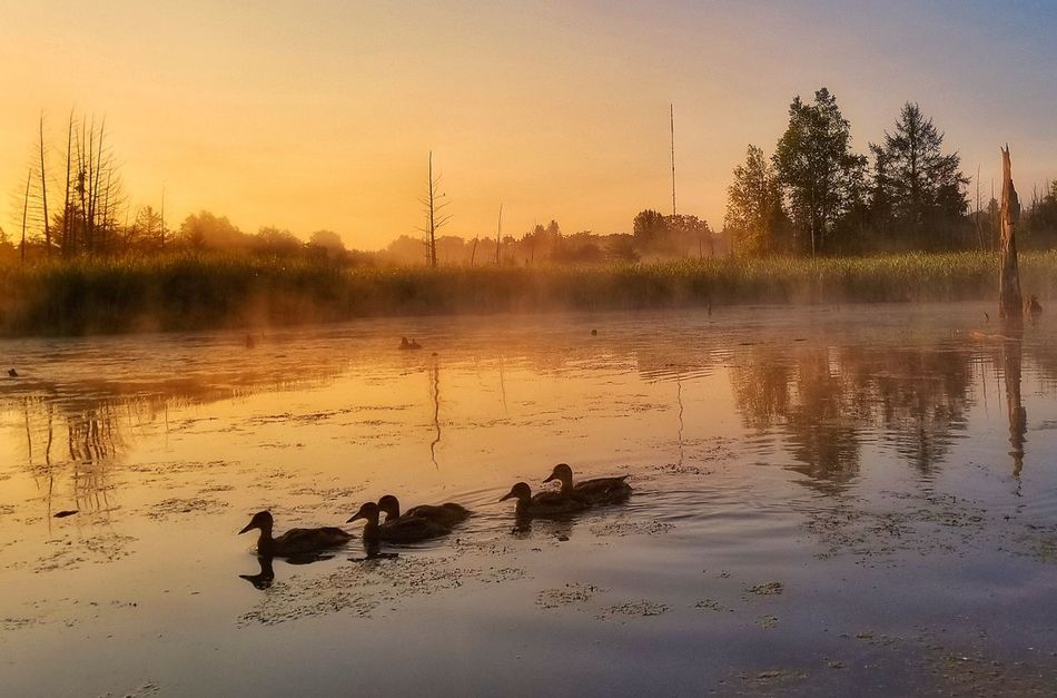 Reflection Sunset Animal Water Animal Wildlife Silhouette Lake No People Tree Fog Autumn Bird Animals In The Wild Outdoors Nature Sky Dawn Landscape Animal Themes Rural Scene Backgrounds Multi Colored Nature Nature Walk