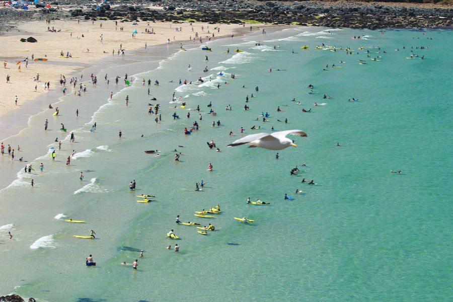Bathers Bathers Beach Beach Beach Photography Cornwall Flight High Angle View Large Group Of People Non-urban Scene Sea Sea And Sky Seagull Seascape Seaside Summer Summertime Summertime ♥ Swimming Tourism Tranquil Scene Tranquility Travel Vacations Water Waterfront