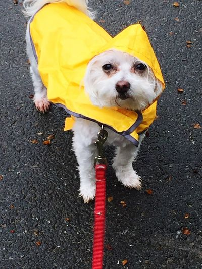 My little Sweet Pea loves a walk in the rain First Eyeem Photo