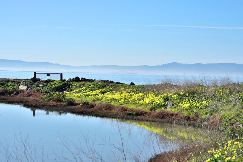Haywards Landing 16 Old Ferry Landing 1850's Hayward Regional Shoreline Park Marsh Gate Tidal Wetlands Landscape Pond Ground Cover Bank Scenic Reflection Reflected Glory Reflections In The Water Marin Headlands San Francisco Bay San Francisco Bay Trail Nature Beauty In Nature Nature_collection Landscape_Collection Landscape_photography San Mateo Bridge Shoreline Fog