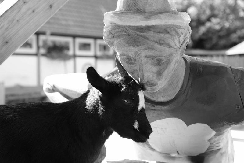 Mammal One Animal Focus On Foreground Wormth Softness
