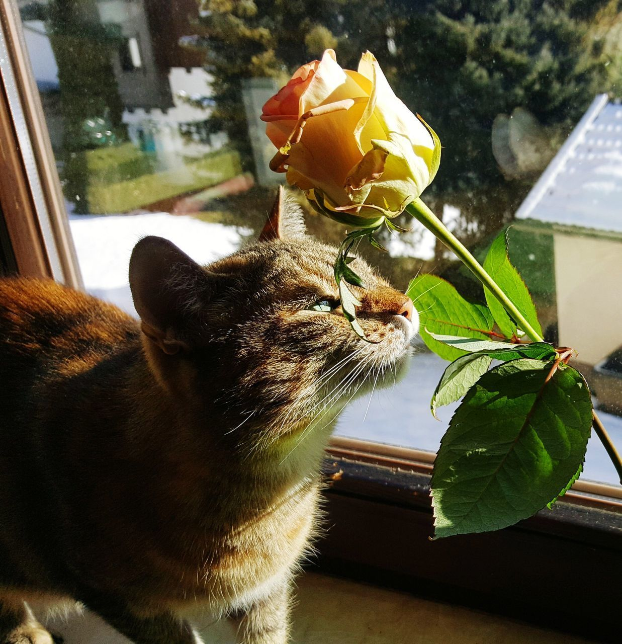 CLOSE-UP OF CAT SITTING ON PLANT IN ROOM