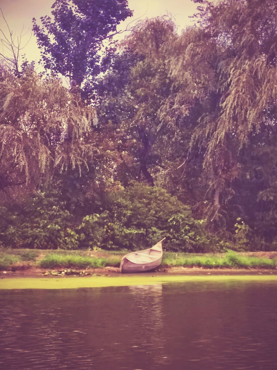 waterfront, water, one animal, nature, lake, day, outdoors, no people, tree, beauty in nature, swan, mountain, nautical vessel, animal themes, bird