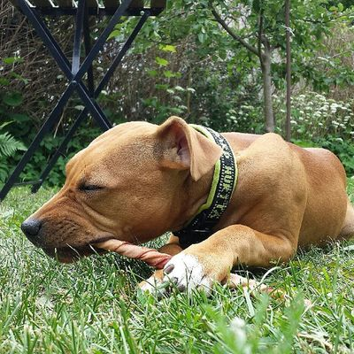 Love My Dog Dontbullymypitbull doglove pitlove pitbyllinstagram pupy pit grass instapit instadog pitty pitti