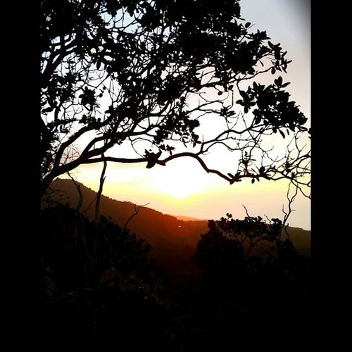 At the top, the mind quiets, you're still, and you just watch. Thequietplace MK Series12 Sunset nature hikes napalicoast luckyweliveHI silhouette scenicphotography Trees EyeEm Best Shots - Nature Sunset_collection Sunset Silhouettes Sunsets Eye4photography